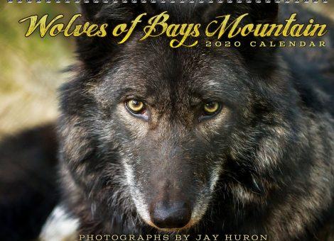2020 Wolf Calendar